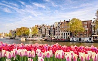 Amsterdam reisetips - tulipaner, shopping og matopplevelser