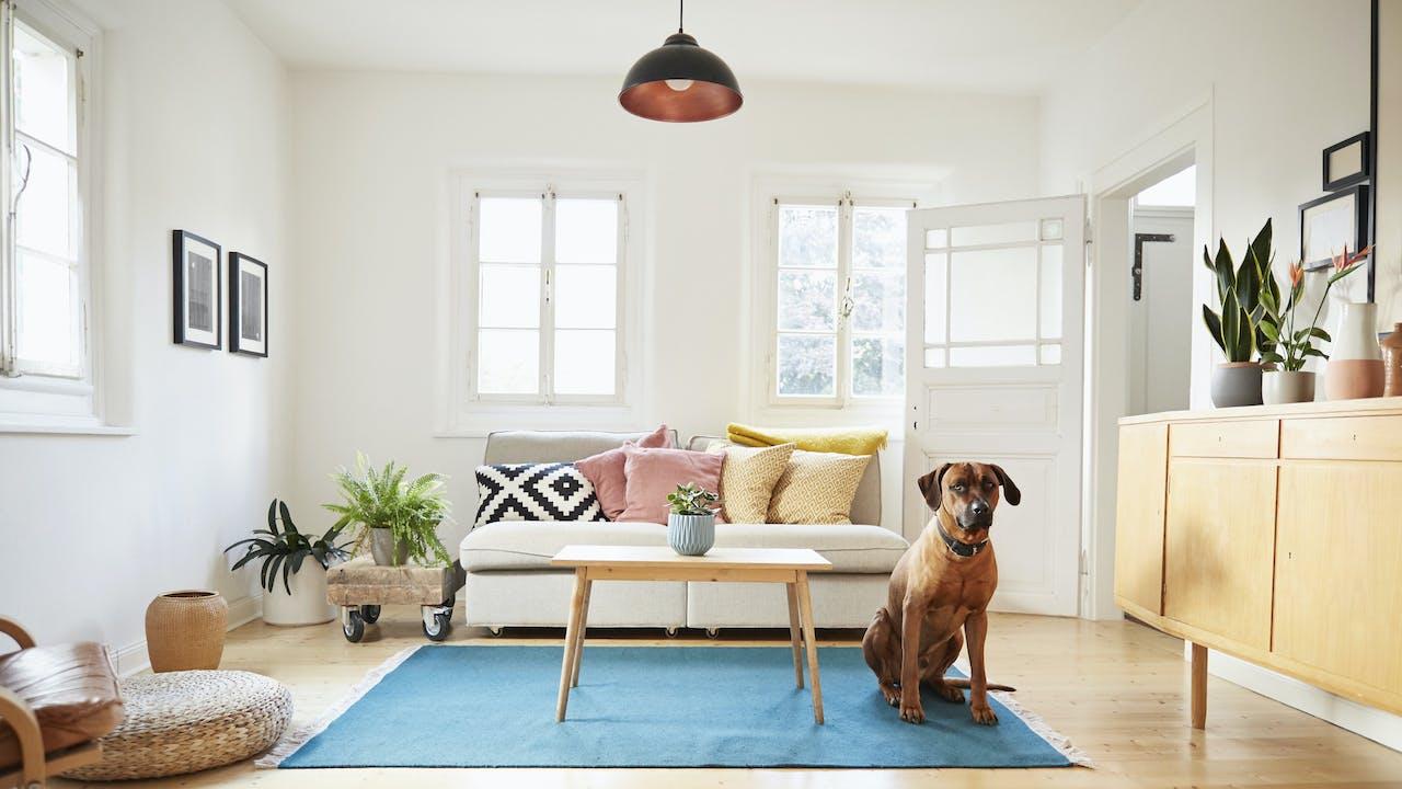 Stue med hund