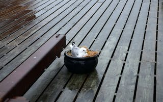 Opplev fuglesafari på Ekkerøy i Finnmark
