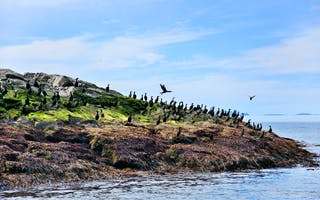Opplev fuglesafari på Nordkapp