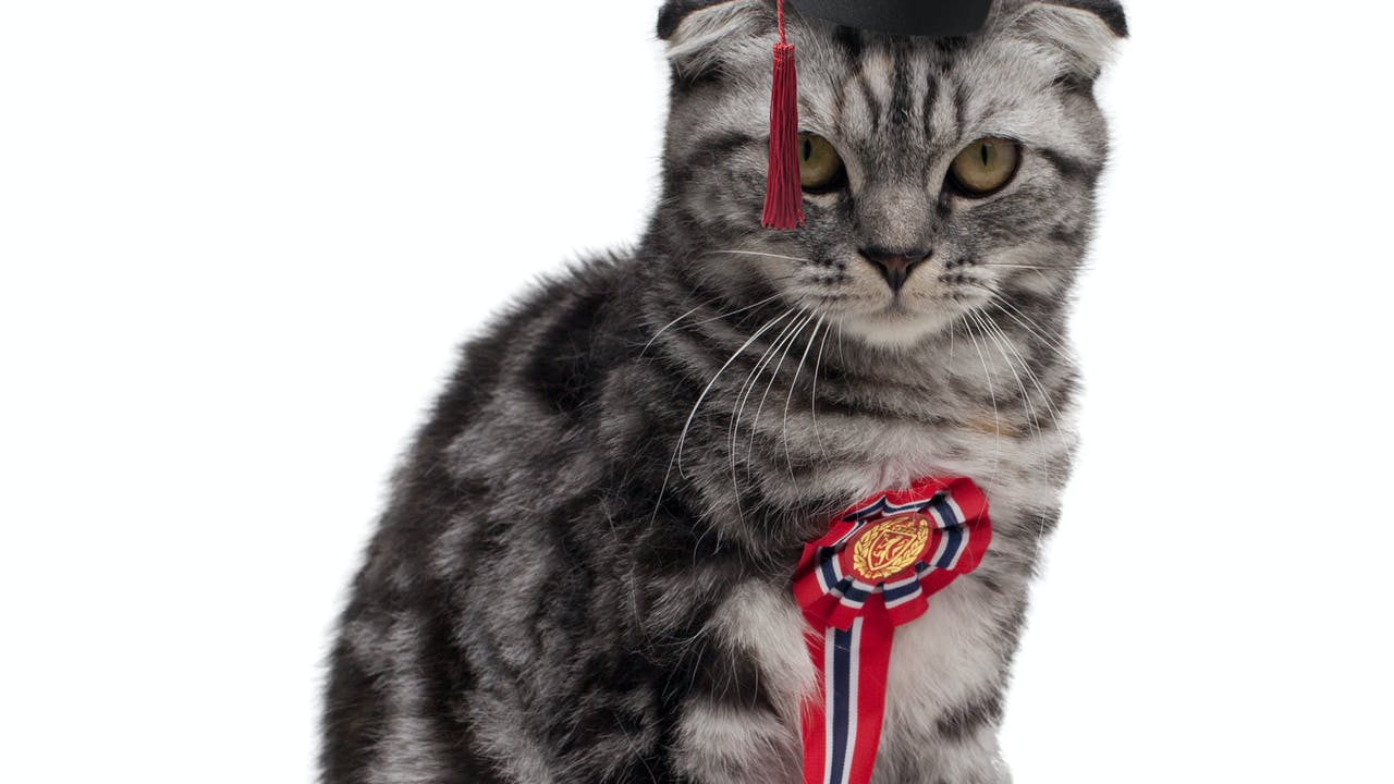 Puse Finn graduate