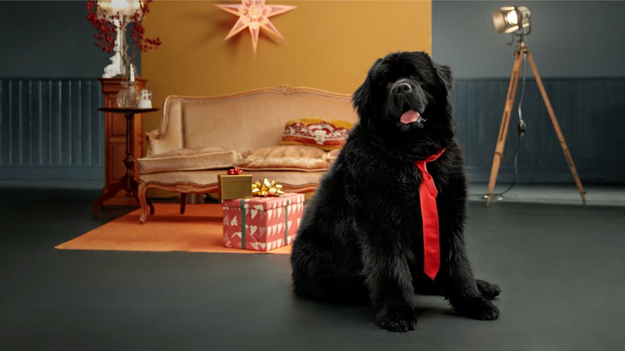 Hunden i huset