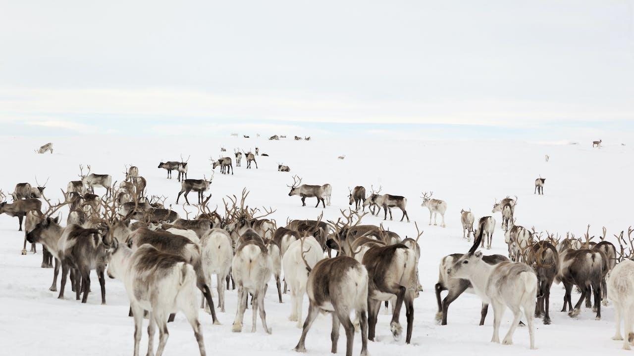 Opplev nordlys og samisk kultur i Karasjok