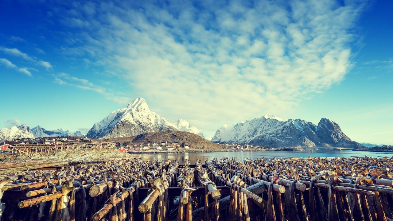 Fiske og hvalsafari i Lofoten
