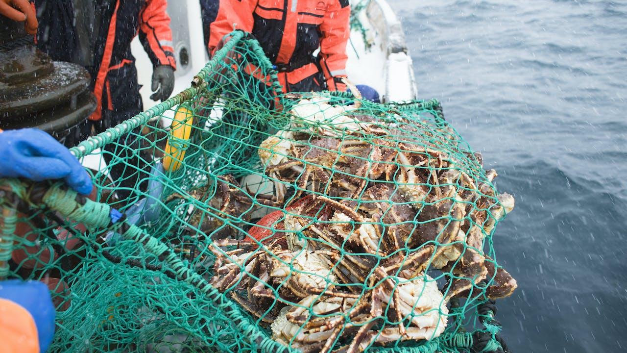 Nordkapp krabbesafari hovedbilde