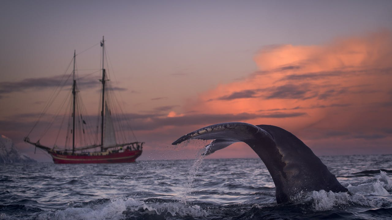 Skjervøy i Troms - hvalsafari og nordlys