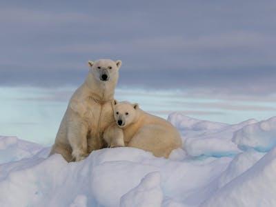 Svalbard - isbjørnens rike