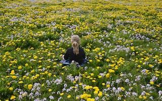 Danmark med barn - ting å gjøre på Sydøstjylland