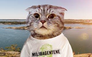 Katt Oppdrag Havplast