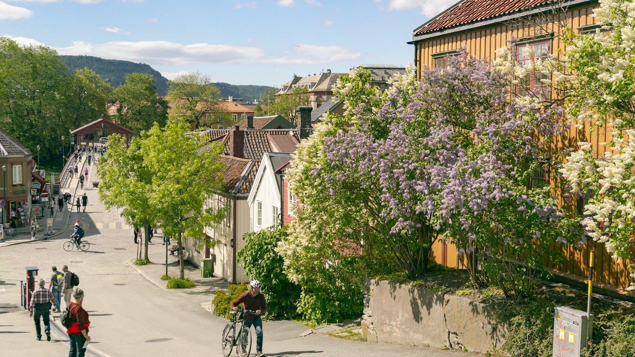 Tips til sykkelturer i Trøndelag