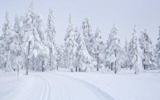 Vintereventyr i Trysil