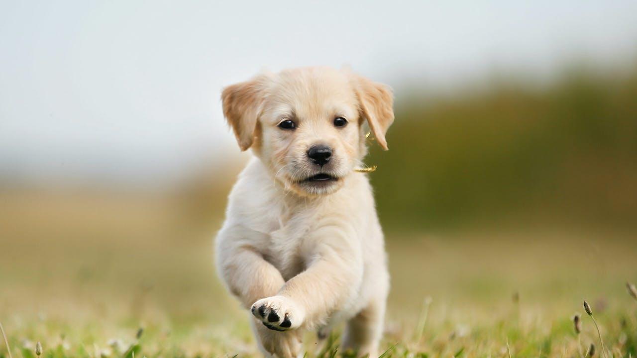 6 gode tips til deg som skal skaffe deg hund