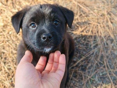 Verdt å vite om hunder
